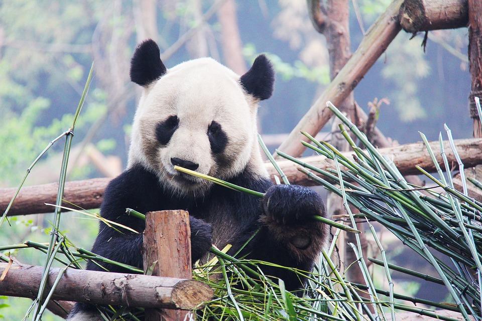 Chengdu Zoo