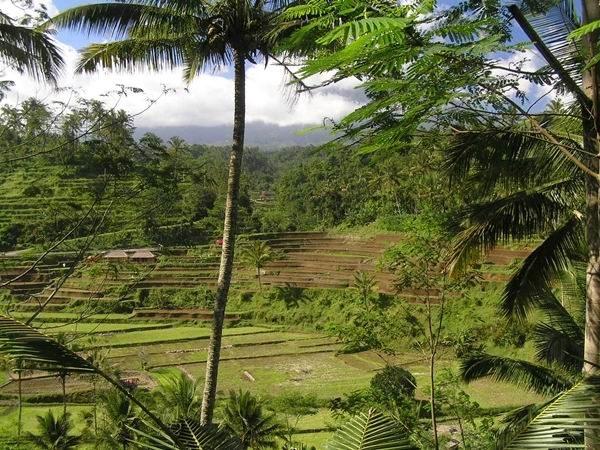 landscape of interior Bali
