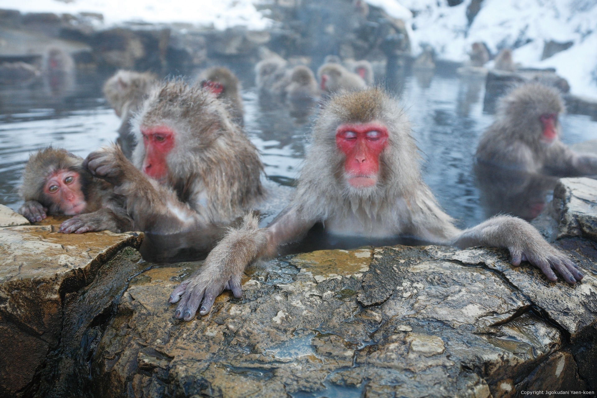 Jigokudani Yaen-Koen snow monkeys